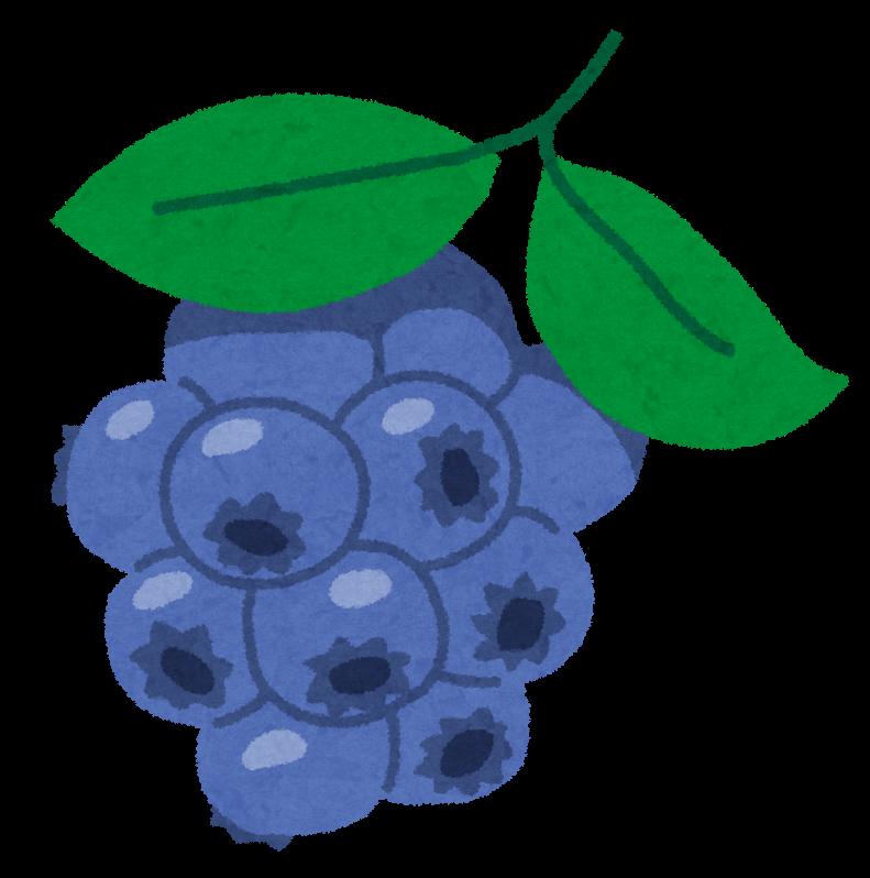 法人の畑に、今年もブルーベリーが多く実りました。